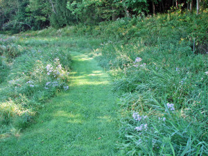A grass path through our meadow