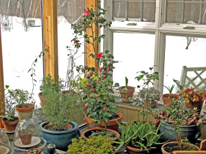 The greenhouse in January